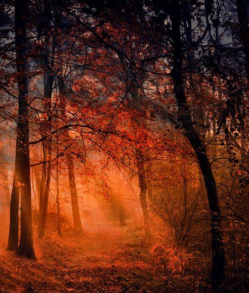 Morgens im Wald von Vera Kämpfe