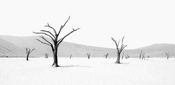 Deadvlei in Namibia in schwarzweiss