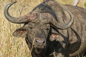 Buffel van