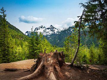Boomstronk tegen de achtergrond van bergen en bomen, Canada van Rietje Bulthuis