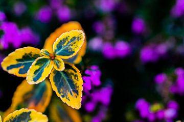 Pflanze gelb von Dianne Peeters