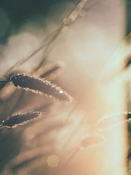 Grassen en licht 1