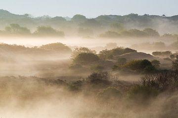 Ochtendmist boven duinen van Katwijk van Menno van Duijn