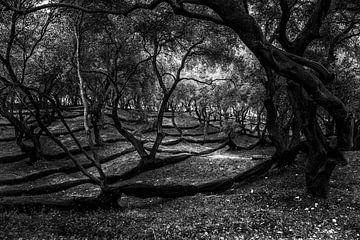 Parga olive grove in black & white von Peter van Eekelen