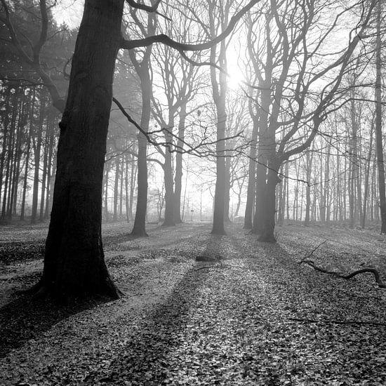 Zonnestralen schijnen door het bos in zwart wit 4