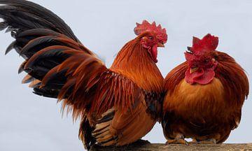 Mit den Hühnern am Spieß von Greta Lipman