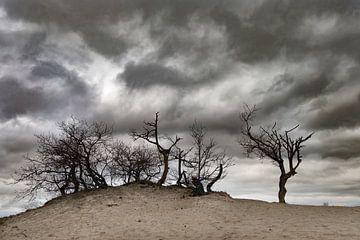 Zand sur Geri van den Boom