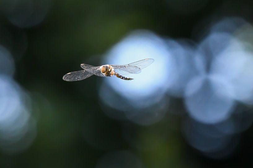 Libelle / Dragonfly van Henk de Boer