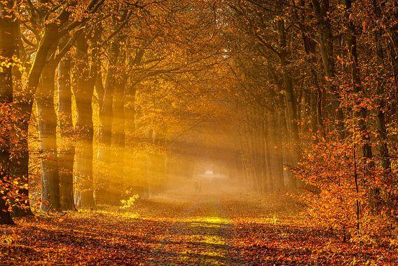 Waldweg im Herbst von Ron Buist