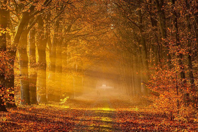 Bospad in de herfst van Ron Buist