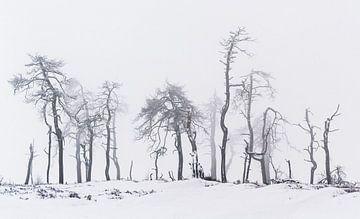 Noir Flohay van Joris Pannemans - Loris Photography
