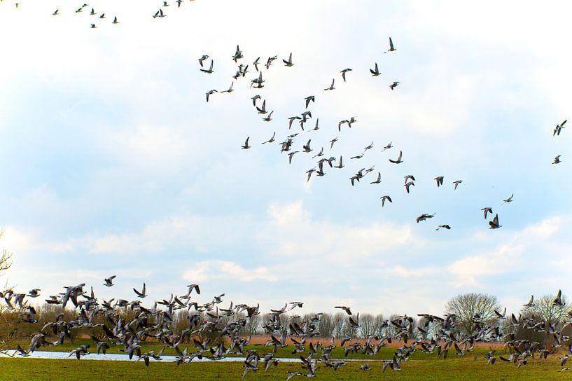 Zwerm Vogels . van Brian Morgan