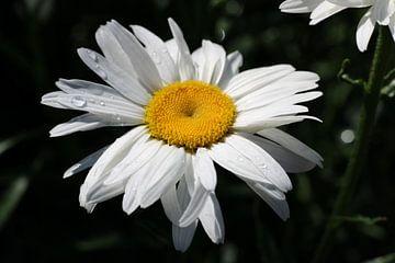 Schöne Blume mit regen von Eva Aker