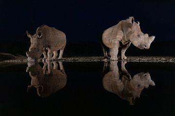 Deux rhinocéros blancs dans l'obscurité près d'un ruisseau sur Peter van Dam