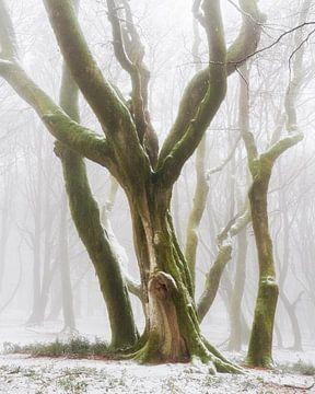 Bereit für den Winter von Lars van de Goor