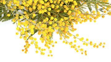 Gelb und Grün von Ineke Huizing