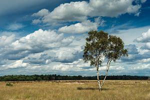 Eenzame berk met wolkenlucht