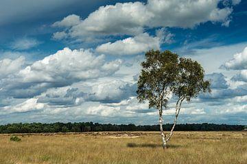Eenzame berk met wolkenlucht van