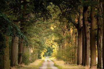 Freedom Road van Kees van Dongen