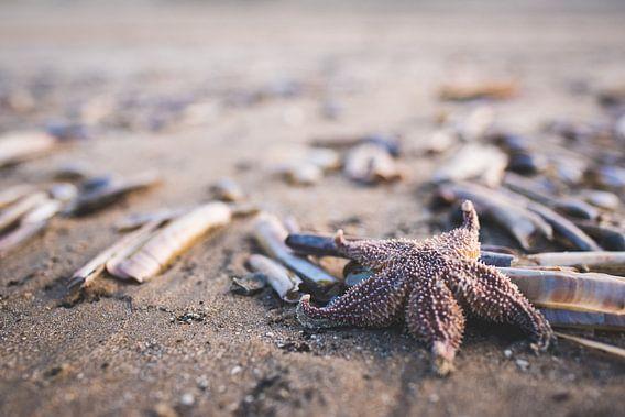 The lone seastar