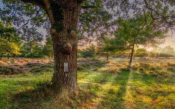 Auf dem Moor. von Robin Pics (verliefd op Utrecht)