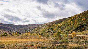 Die Straße durch Grimsdalen im Herbst von Barbara Brolsma