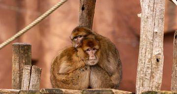 Knuffel aapjes von Donny Kardienaal
