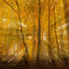 Autumn Burst van Hans Koster