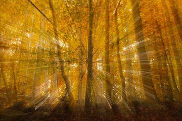 Autumn Burst von Hans Koster
