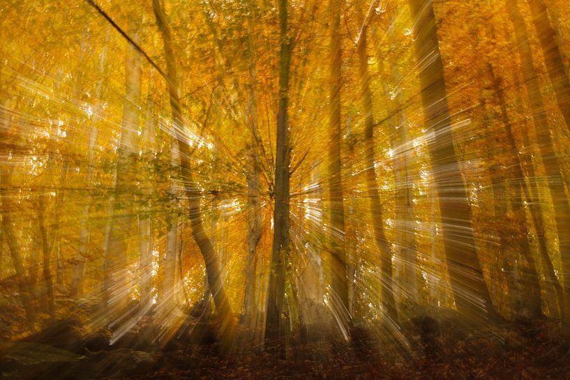 Autumn Burst sur Hans Koster