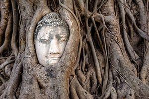 Boeddha in boom