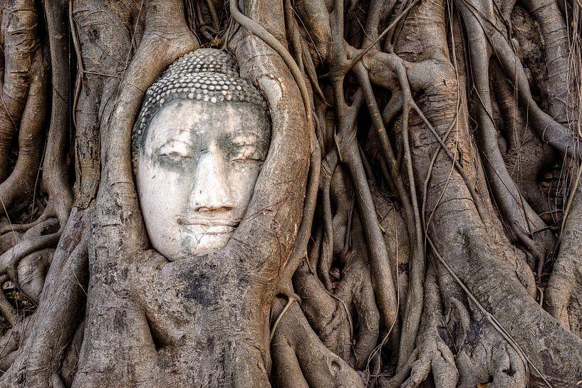 Boeddha in boom van Richard Guijt