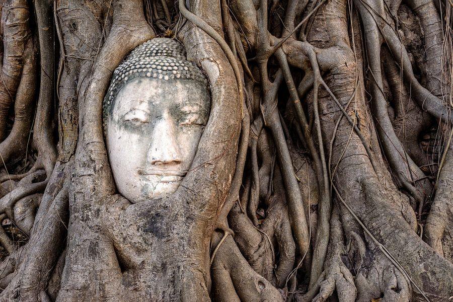 buddha in tree auf leinwand poster bestellen. Black Bedroom Furniture Sets. Home Design Ideas