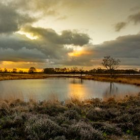 Pingo in het Brunstingerveld van Arie Flokstra Natuurfotografie