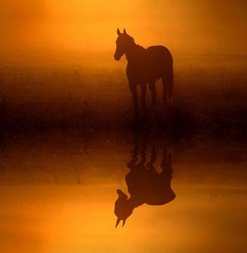 Pferd im Nebel van Lars Tuchel