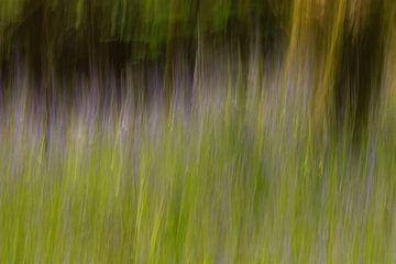 Glockenblumen im Wald icm von Licht! Fotografie