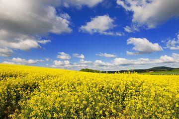 Landschaft mit Raps und Wolken von Ivonne Wierink