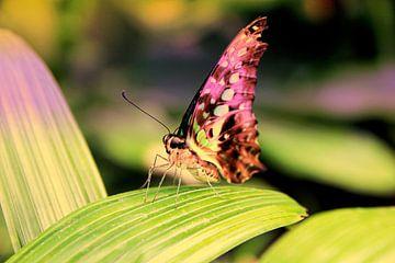 Kleurrijke vlinder van Carin Klabbers