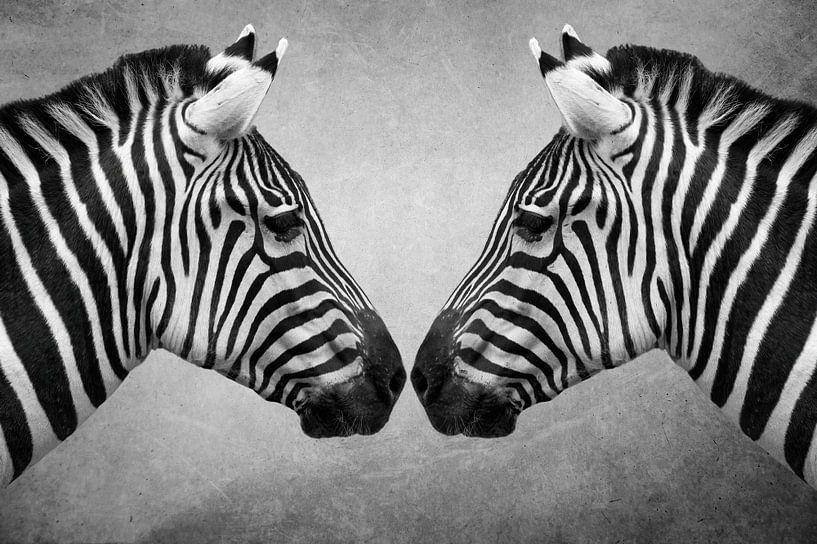 Portret Zebra in zwart-wit van Marjolein van Middelkoop