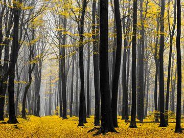 Forêt dorée sur