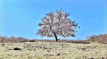 De Alleenstaande Boom - Natuur - Landschap - Loonse en Drunense Duinen - Schilderij