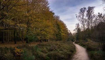 Bos landschap in de herfst van Toon van den Einde