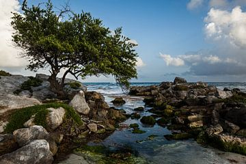 Boom bij de zee van Wethorse Heleen