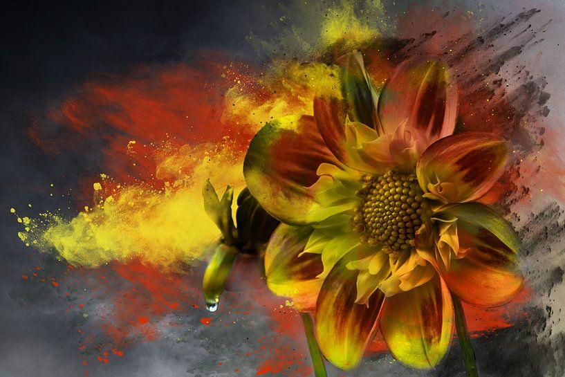 Herfstbloem met druppel van Harry Stok