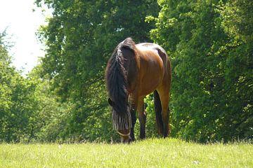 unieke Paard in de natuur von Rutger Bilk