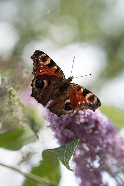 Dromerig plaatje van een vlinder van Milou Oomens