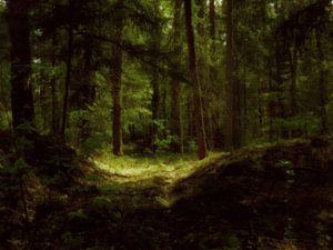 Een sfeervol duister bos. van André Mesker