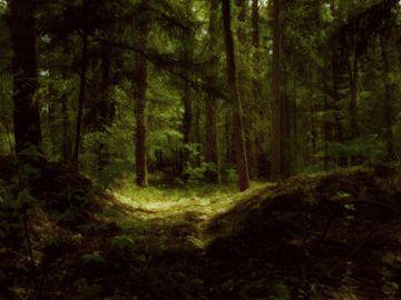 Een sfeervol duister bos. von André Mesker
