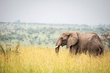 Elefant / Afrikanische Landschaft / Naturfotografie / Uganda von Jikke Patist