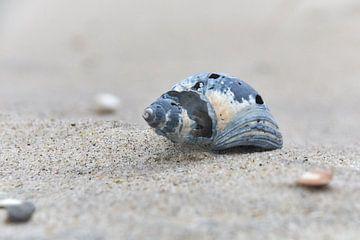 Slakkenhuis op het strand van Ad Jekel